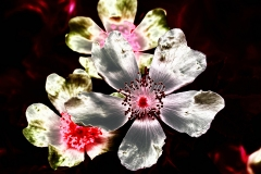 DSC_6669-Magnolia...2